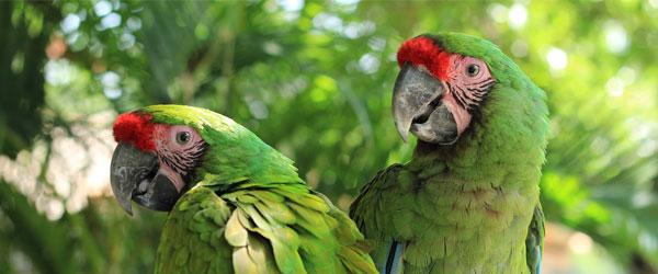 Pienso para aves frunjívoras