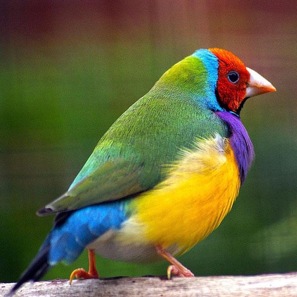 Pienso para aves